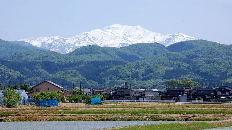 雪山と水田