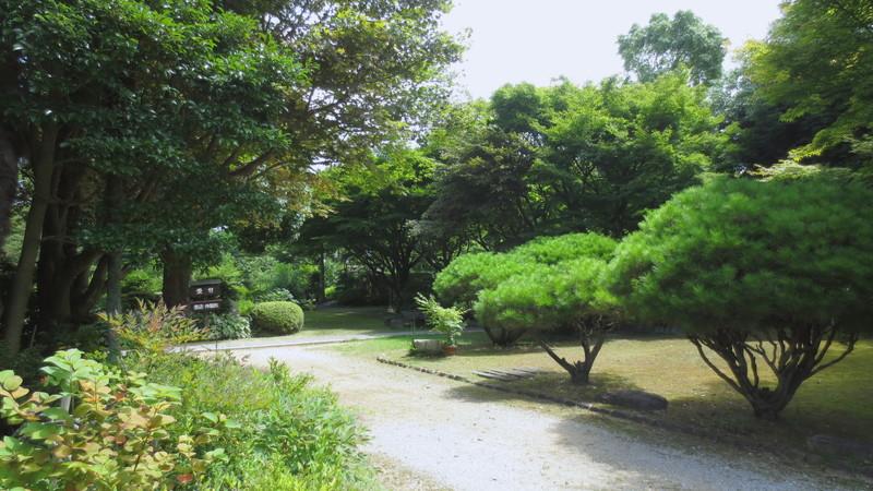 緑まぶしい庭