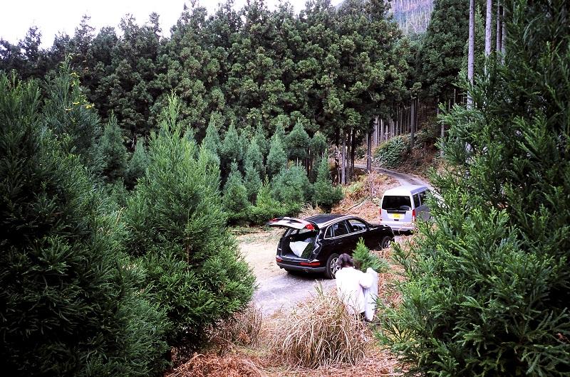 杉林に2台の車