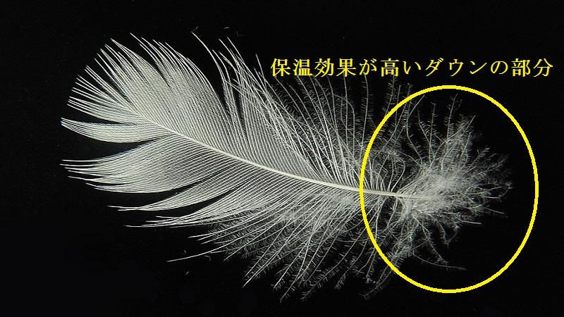 水どりの羽
